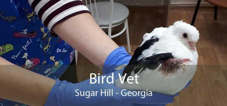 Bird Vet Sugar Hill - Georgia
