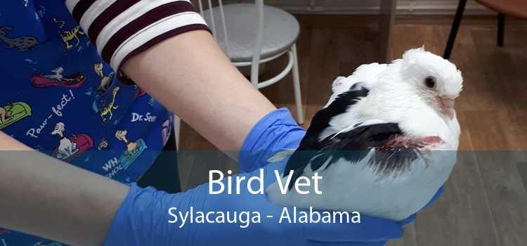 Bird Vet Sylacauga - Alabama