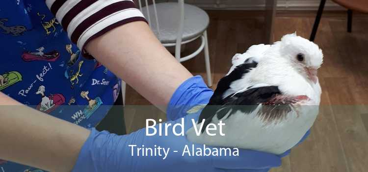 Bird Vet Trinity - Alabama
