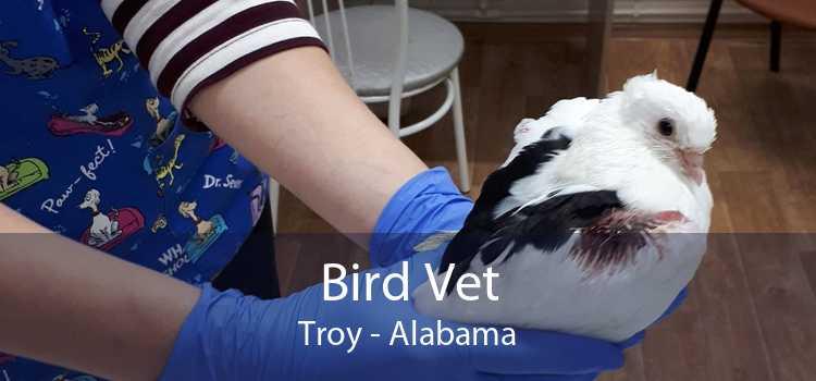 Bird Vet Troy - Alabama