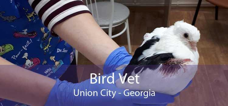Bird Vet Union City - Georgia