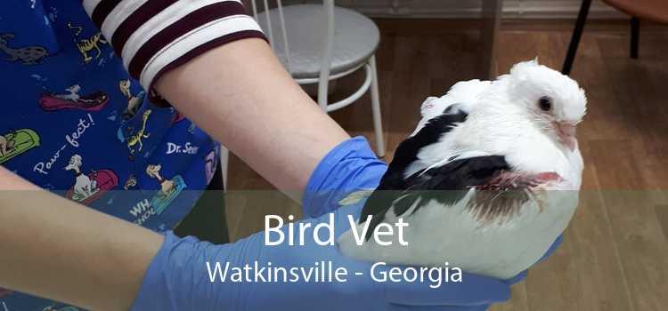Bird Vet Watkinsville - Georgia