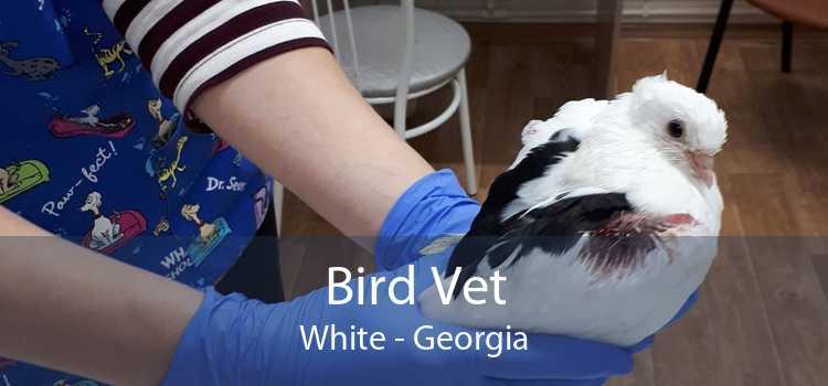 Bird Vet White - Georgia