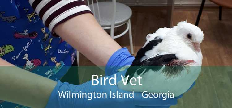 Bird Vet Wilmington Island - Georgia