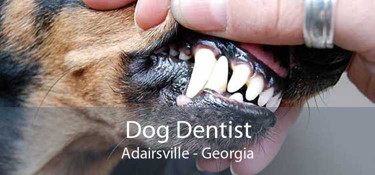 Dog Dentist Adairsville - Georgia