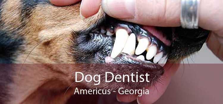 Dog Dentist Americus - Georgia