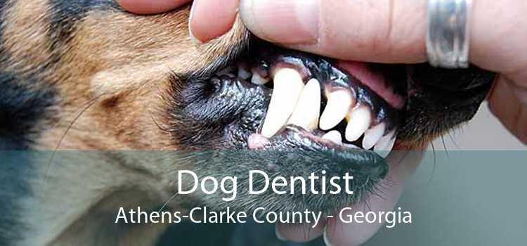 Dog Dentist Athens-Clarke County - Georgia