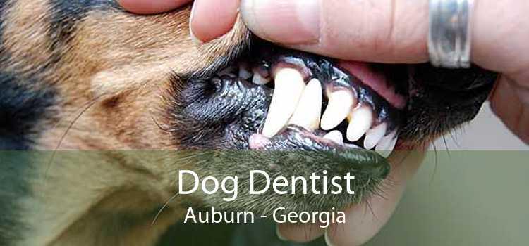 Dog Dentist Auburn - Georgia