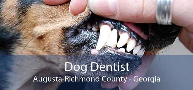 Dog Dentist Augusta-Richmond County - Georgia