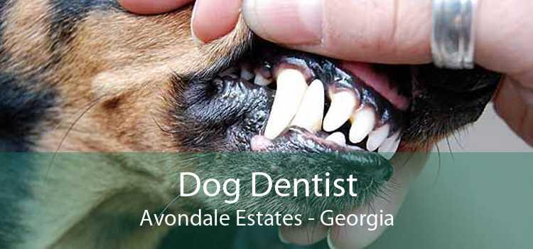 Dog Dentist Avondale Estates - Georgia