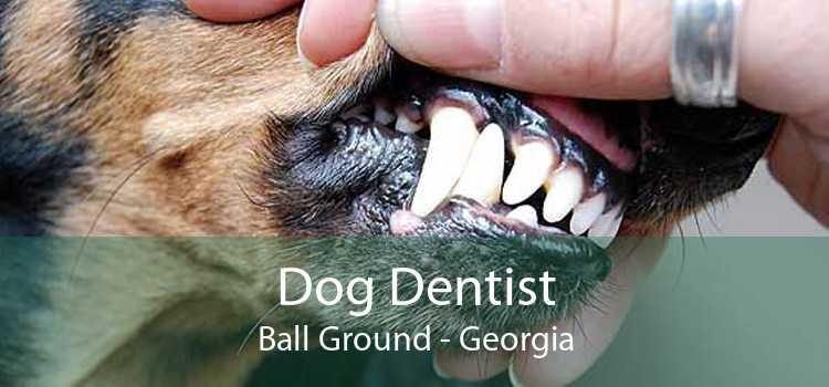 Dog Dentist Ball Ground - Georgia