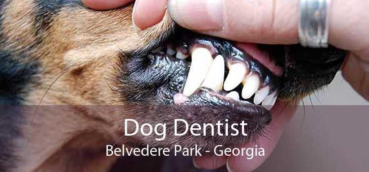 Dog Dentist Belvedere Park - Georgia