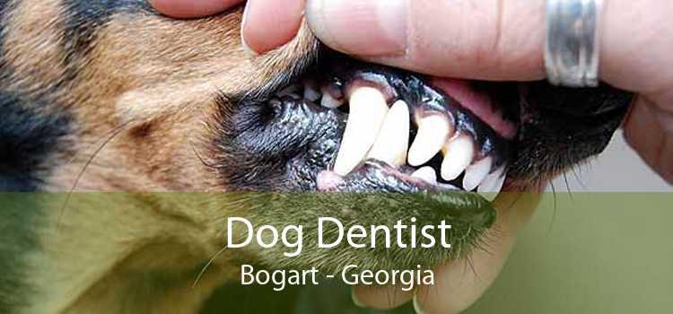 Dog Dentist Bogart - Georgia