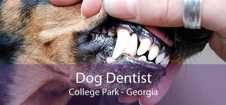 Dog Dentist College Park - Georgia