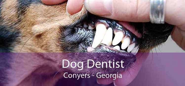Dog Dentist Conyers - Georgia