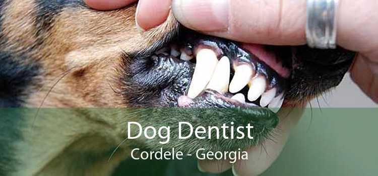 Dog Dentist Cordele - Georgia