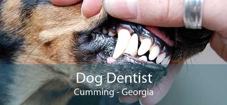 Dog Dentist Cumming - Georgia