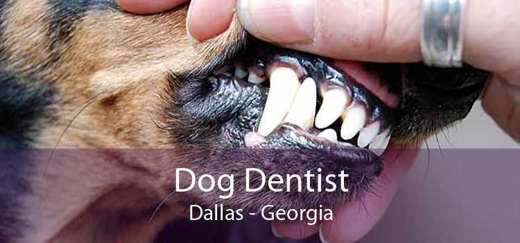 Dog Dentist Dallas - Georgia