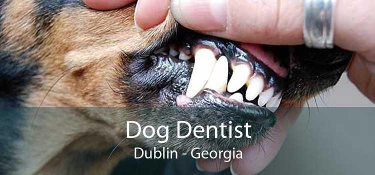 Dog Dentist Dublin - Georgia
