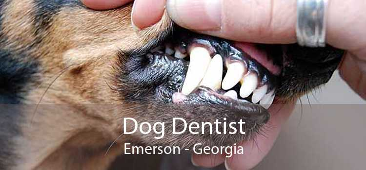 Dog Dentist Emerson - Georgia