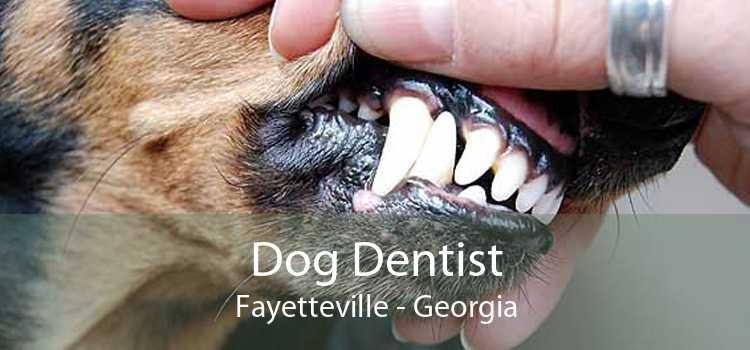 Dog Dentist Fayetteville - Georgia