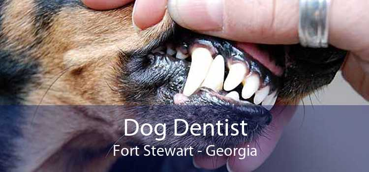 Dog Dentist Fort Stewart - Georgia