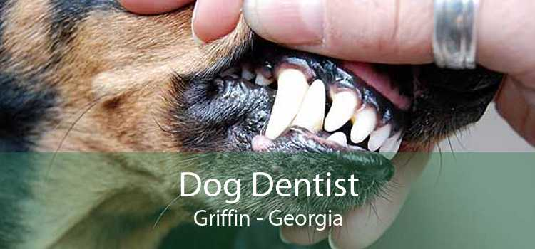Dog Dentist Griffin - Georgia