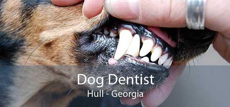 Dog Dentist Hull - Georgia