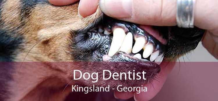 Dog Dentist Kingsland - Georgia