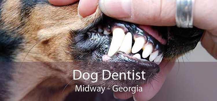 Dog Dentist Midway - Georgia