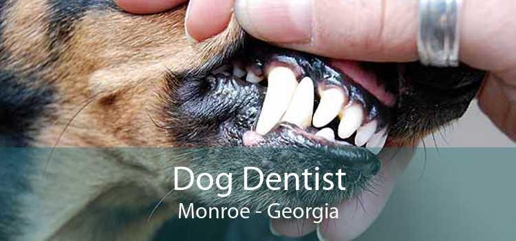 Dog Dentist Monroe - Georgia