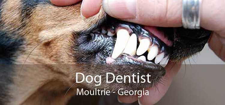 Dog Dentist Moultrie - Georgia