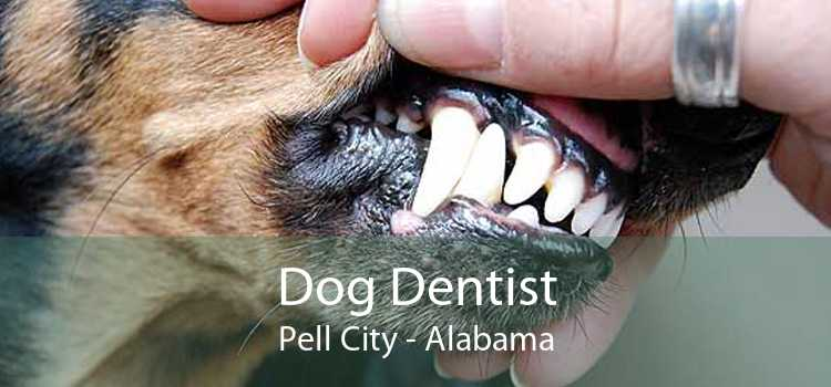Dog Dentist Pell City - Alabama