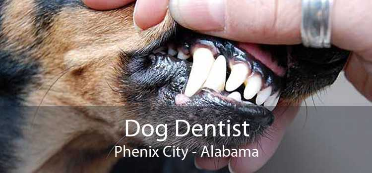 Dog Dentist Phenix City - Alabama
