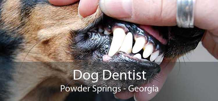 Dog Dentist Powder Springs - Georgia
