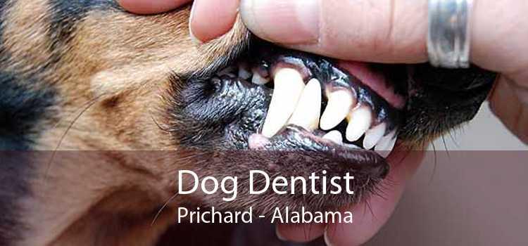 Dog Dentist Prichard - Alabama