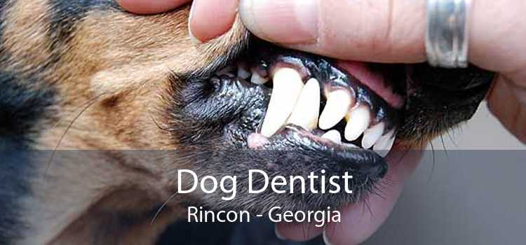 Dog Dentist Rincon - Georgia