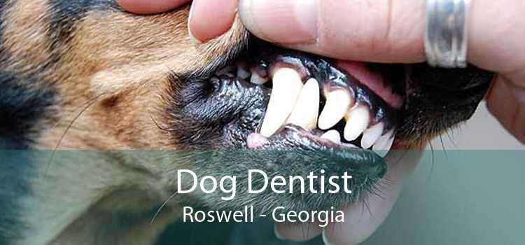 Dog Dentist Roswell - Georgia