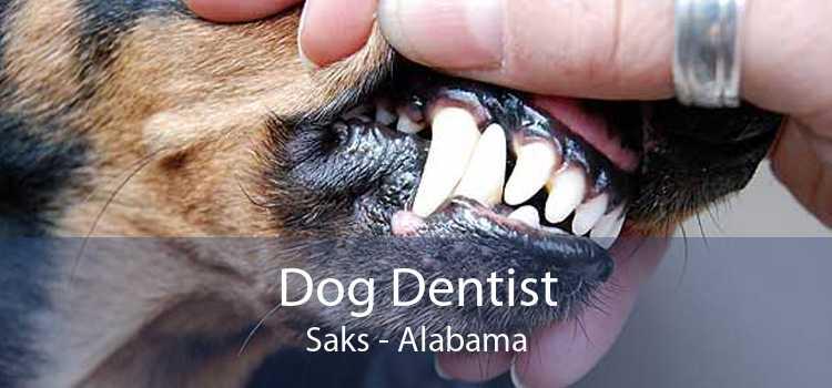 Dog Dentist Saks - Alabama