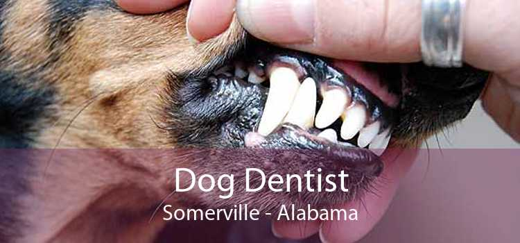 Dog Dentist Somerville - Alabama