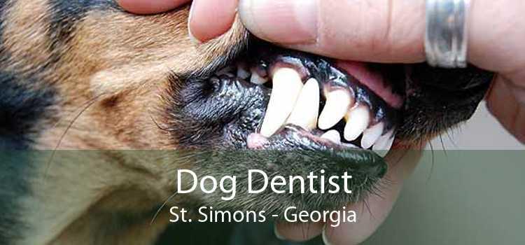 Dog Dentist St. Simons - Georgia
