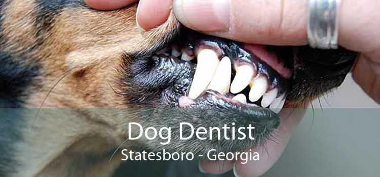 Dog Dentist Statesboro - Georgia