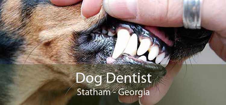 Dog Dentist Statham - Georgia