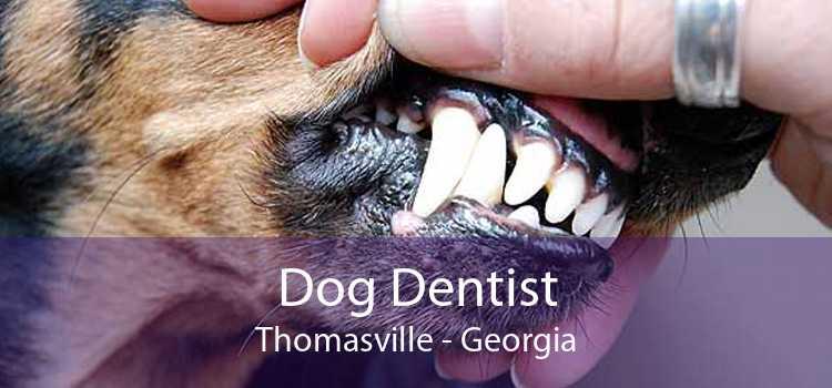Dog Dentist Thomasville - Georgia