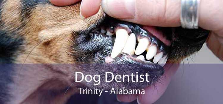 Dog Dentist Trinity - Alabama