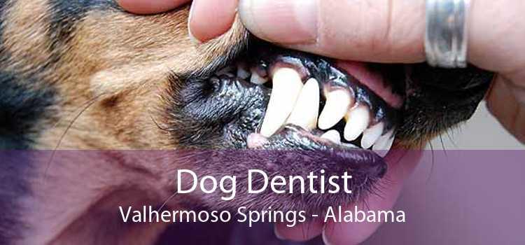 Dog Dentist Valhermoso Springs - Alabama