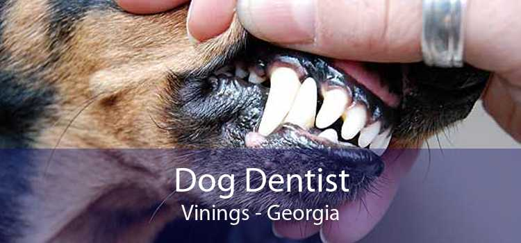 Dog Dentist Vinings - Georgia