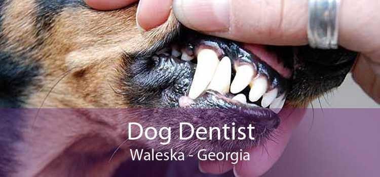 Dog Dentist Waleska - Georgia