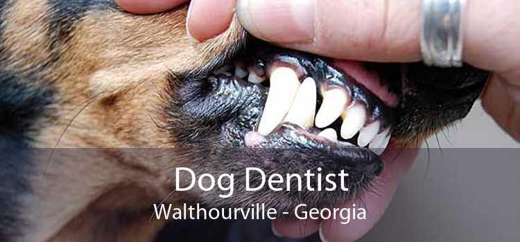 Dog Dentist Walthourville - Georgia