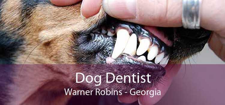 Dog Dentist Warner Robins - Georgia
